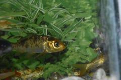 Pesce vicino ad erba verde fotografie stock