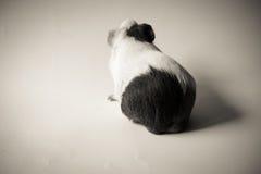Pesche del tono della cavia in bianco e nero Immagine Stock
