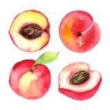 Pesche mature succose Frutti affettati isolati su fondo bianco Disegno sano dell'alimento di estate Acquerello disegnato a mano illustrazione di stock
