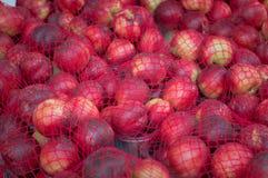 Pesche molto succose Azienda agricola di agricoltura del mercato in pieno organica Priorità bassa della frutta Mucchio delle pesc Immagine Stock