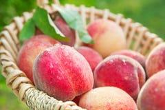 Pesche organiche naturali selezionate fresche in un primo piano del canestro Fotografia Stock Libera da Diritti