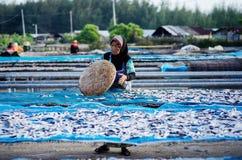Peschi asciutto al pantai che ottiene, kelantan Malesia fotografie stock libere da diritti