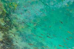 Peschi che può essere vede sotto l'acqua Fotografie Stock