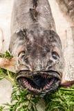 Peschi il espada nero della guaina nel mercato ittico Mercat de la Boqueri immagine stock