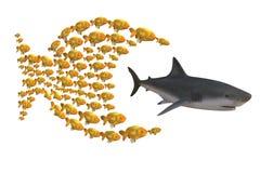 Peschi il gruppo che insegue lo squalo Immagine Stock