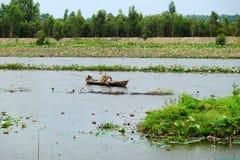 Peschi il pesce sulla stagione di inondazione al delta del Mekong Immagine Stock