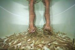 Peschi il trattamento di pedicure della stazione termale Fotografia Stock