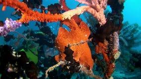 Peschi il underwater dell'operatore subacqueo e del pescatore su fondo del fondale marino del sole della riflessione video d archivio