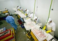 Peschi l'impianto di lavorazione Fotografia Stock Libera da Diritti