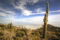 Peschi l'isola, Salar de Uyuni, Bolivia Fotografie Stock