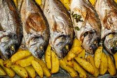 Peschi lo sparus aurata per cuocere con le patate ed i verdi Immagine Stock