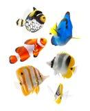 Peschi, pesci della scogliera, partito dei pesci di mare isolato sul whi Fotografia Stock