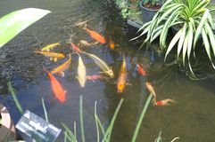 Peschi in serra al parco pubblico di re Rama IX fotografie stock libere da diritti