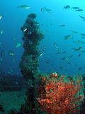 Peschi su una scogliera Fotografia Stock Libera da Diritti