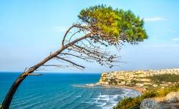 Peschici gargano italy aleppo pine tree lashed wind mediterranea Stock Images