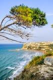 Peschici gargano italy aleppo pine tree lashed wind mediterranea Royalty Free Stock Image