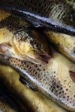 Pesce immagine stock