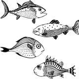 pesci Immagine Stock Libera da Diritti