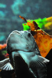 Pesci in acquario fotografia stock