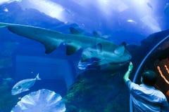 Pesci - acquario di Barcellona Fotografie Stock Libere da Diritti