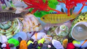 Pesci in acquario variopinto in underwater archivi video