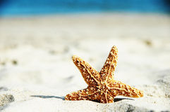 Pesci adorabili della stella Immagine Stock Libera da Diritti
