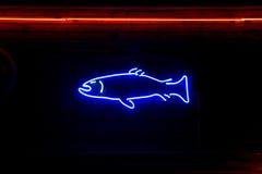 Pesci al neon Immagine Stock