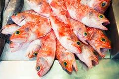 Pesci arancio al mercato ittico Fotografia Stock