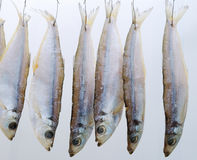 Pesci asciutti Fotografia Stock