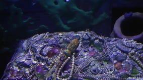 Pesci blu di avventura in acquario archivi video