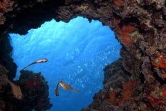 Pesci in caverna Immagini Stock