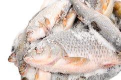 Pesci congelati Fotografie Stock Libere da Diritti