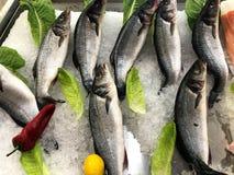 Pesci CONGELATI O pesce nel ghiaccio Frammento dal deposito del pesce immagini stock libere da diritti