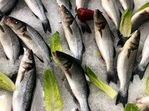 Pesci CONGELATI O pesce nel ghiaccio Frammento dal deposito del pesce fotografia stock