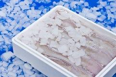Pesci in contenitore di ghiaccio Immagini Stock Libere da Diritti