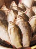 Pesci crudi freschi   fotografia stock