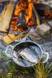 Pesci crudi marinati Fotografia Stock Libera da Diritti