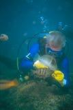Pesci d'alimentazione dell'operatore subacqueo fotografia stock