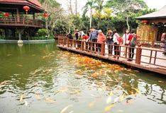 Pesci d'alimentazione della gente al giardino Fotografia Stock Libera da Diritti