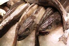 Pesci d'ottone sul mercato dell'alimento Fotografie Stock