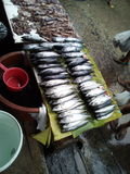 Pesci da vendere a Hong Kong Fotografia Stock