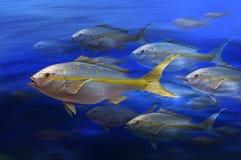 Pesci dalla coda gialla immagine stock libera da diritti
