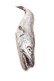 Pesci dei merluzzi. immagini stock