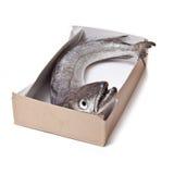 Pesci dei merluzzi interi. fotografia stock libera da diritti