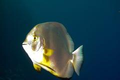 Pesci del blocco fotografie stock