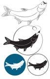 Pesci del cavedano Immagini Stock Libere da Diritti