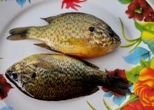 Pesci del fiume Fotografie Stock