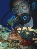 Pesci del leone con l'operatore subacqueo Immagini Stock