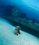 Pesci del leone e naufragio della nave immagine stock