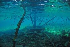 Pesci del maggiore di sergente vicino alla struttura subacquea Fotografia Stock